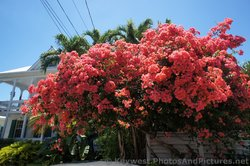 Red Flowers from tropical plant in Key West.jpg