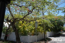 Trees surround a corner lot on Pearl St Key West.jpg