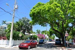 Tree-lined corner of Eaton & Margaret St in Key West.jpg